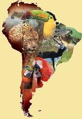карты Южной Америки