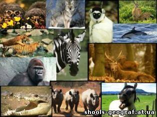 """фото """"Животные"""""""